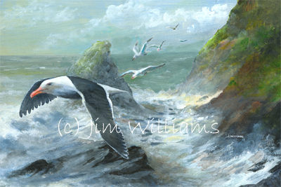 Black Backed Gull painting
